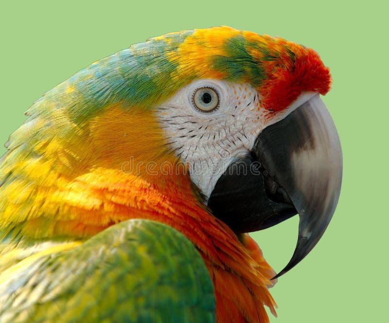 Beak, Bird, Parrot, Fauna Free Public Domain Cc0 Image