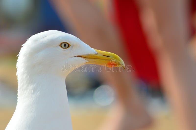 Beak, Bird, Seabird, Gull Free Public Domain Cc0 Image