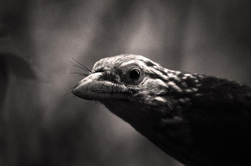 Beak, Black And White, Fauna, Monochrome Photography stock photography