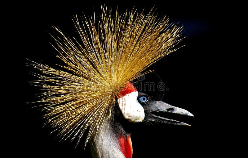 Beak, Close Up, Feather, Bird stock image
