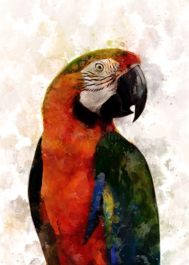 Beak, Macaw, Parrot, Bird stock images