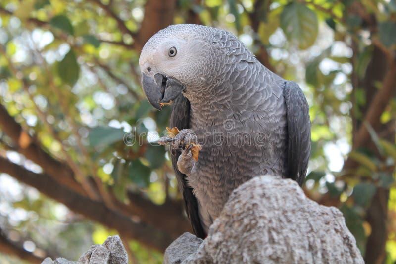 Beak, Parrot, Fauna, Bird royalty free stock photos