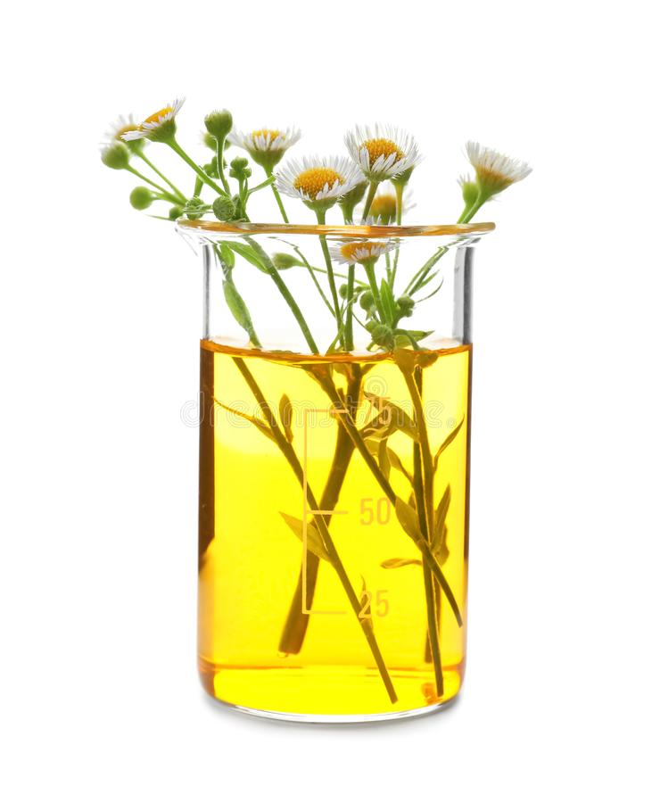 Free Beaker With Flowers On White Background Royalty Free Stock Images - 151127959
