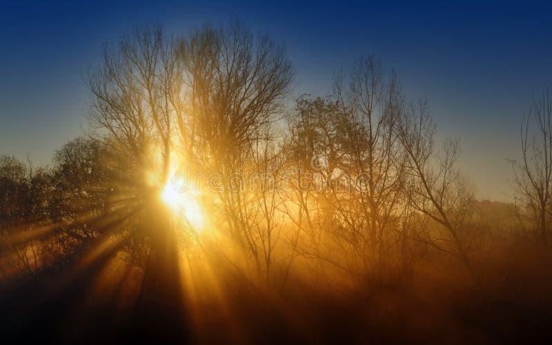 Beams of soft light. Sun rays through trees and fog