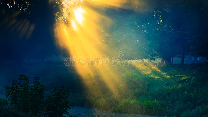 Beams of the sun through foliage of trees in fog at the river stock photo