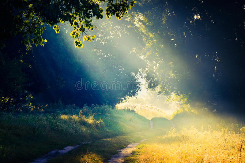Beams of the sun on a glade in the wood through foliage of trees in fog royalty free stock photo