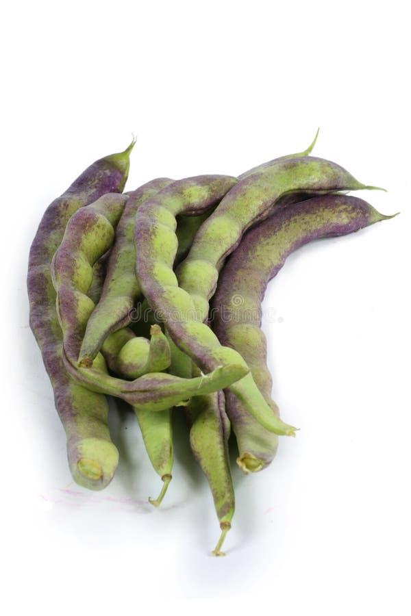 Bean stock image