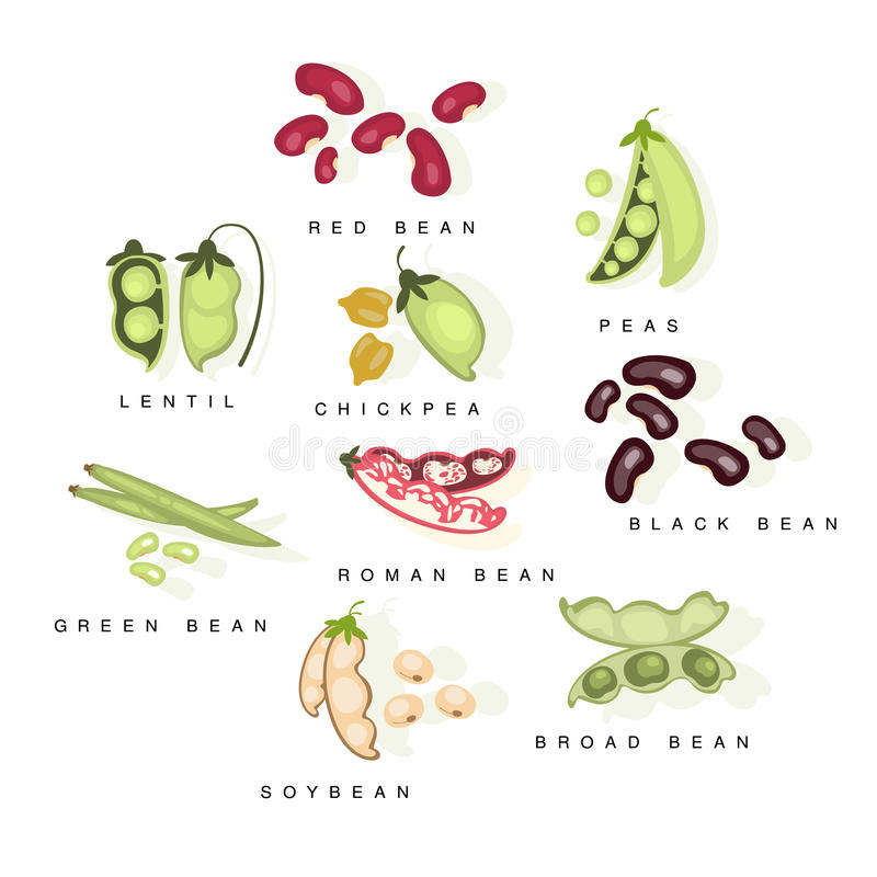 Bean Cultures With Names Set illustration de vecteur