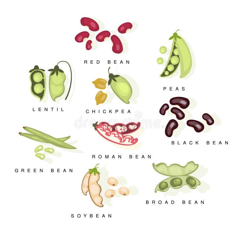 Bean Cultures With Names Set vektor abbildung