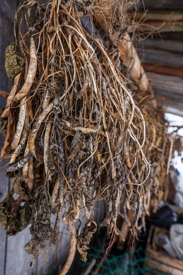 Bean Drying thuis royalty-vrije stock foto