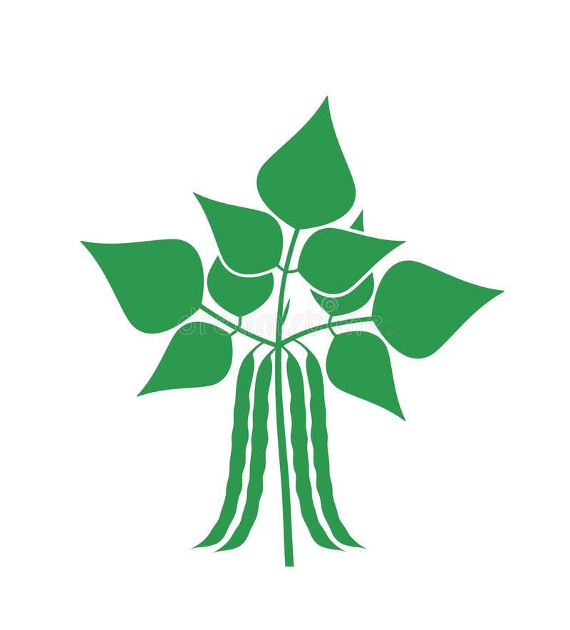 haricot et plante illustration stock illustration du pousse 27464692. Black Bedroom Furniture Sets. Home Design Ideas