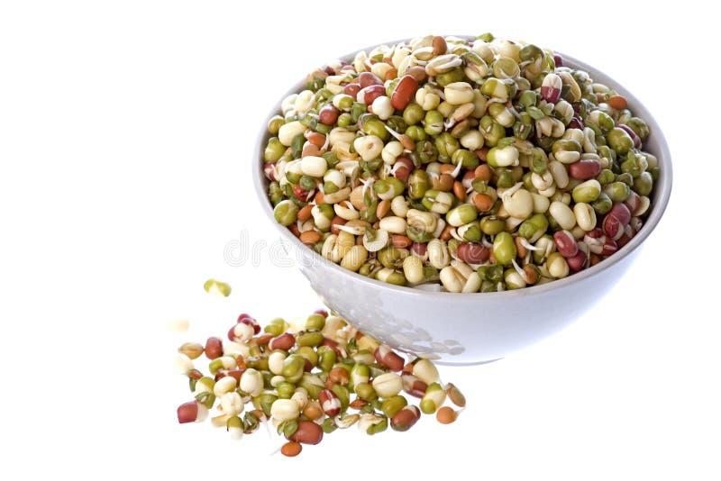 Download Bean Salad stock image. Image of fresh, edible, natural - 5991979