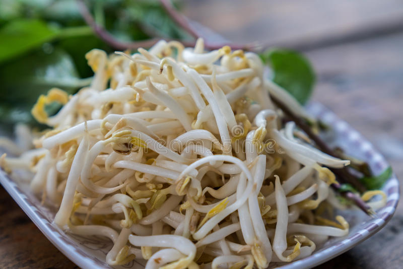 Bean Sprouts stockfotos