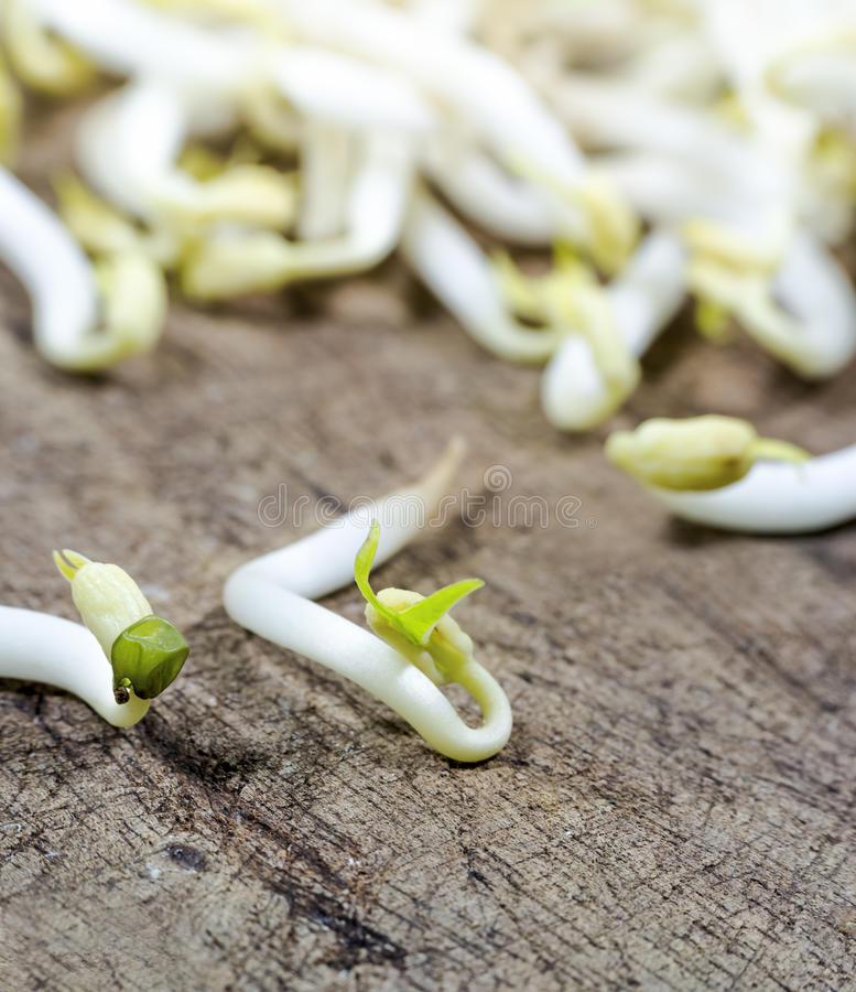 Bean Sprouts royalty free stock photo