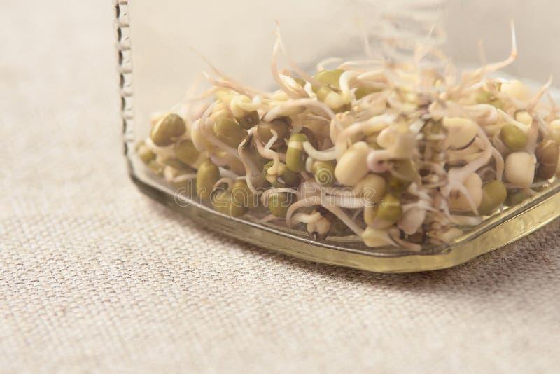 Bean Sprouts Frasco de vidro Fundo neutro imagem de stock royalty free