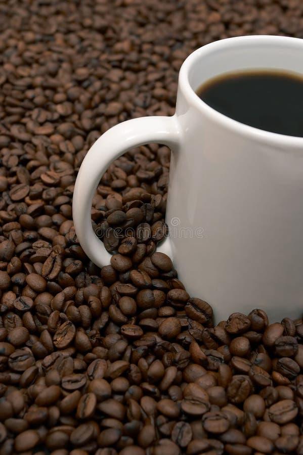 bean warząca kawy zdjęcia stock