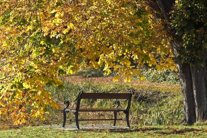 Beanch con le foglie morte in autunno in Danimarca immagini stock libere da diritti