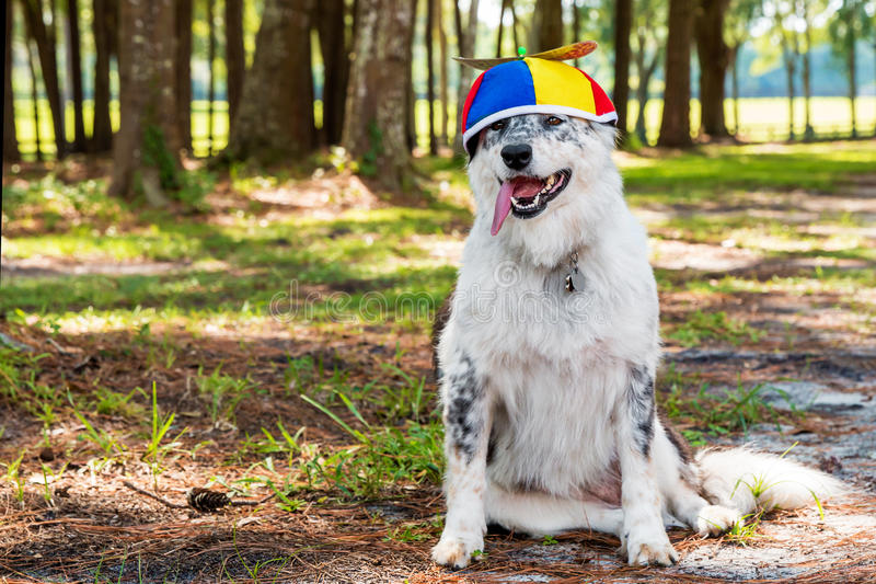 Beanie vestindo da hélice do cão imagem de stock royalty free