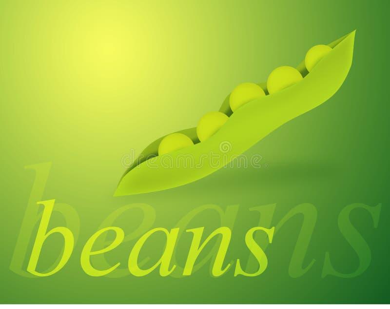 Beans vector illustration