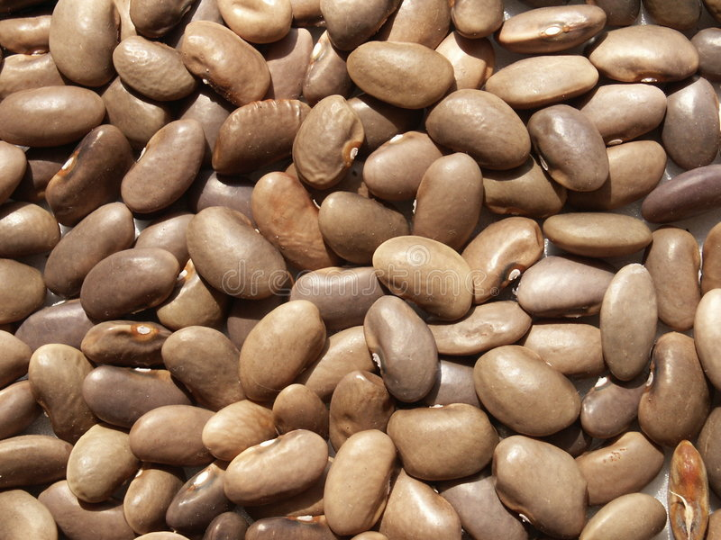Beans. Bulgarian brown beans royalty free stock photography