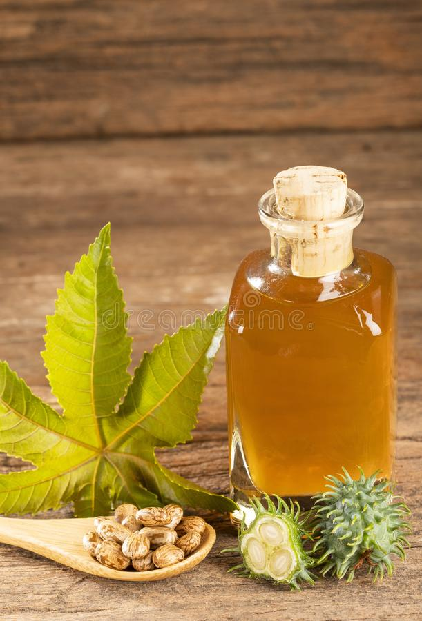 Beans and castor oil - Ricinus communis royalty free stock photos