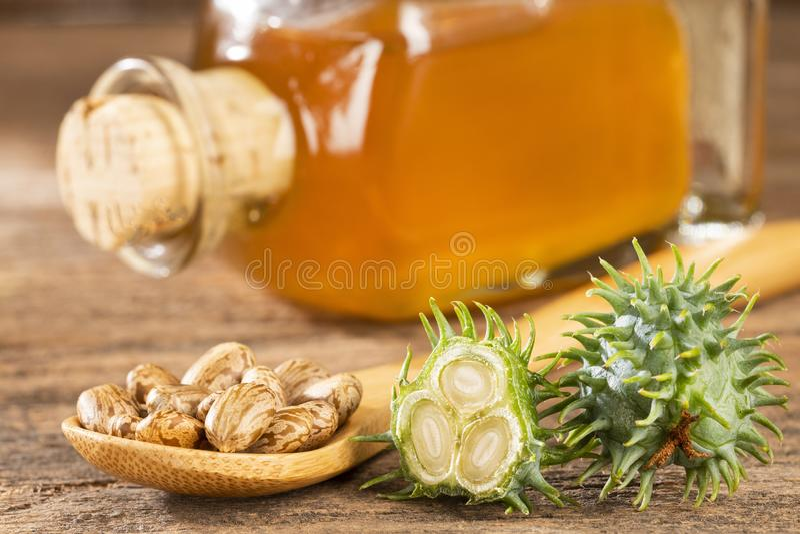 Beans and castor oil - Ricinus communis stock image