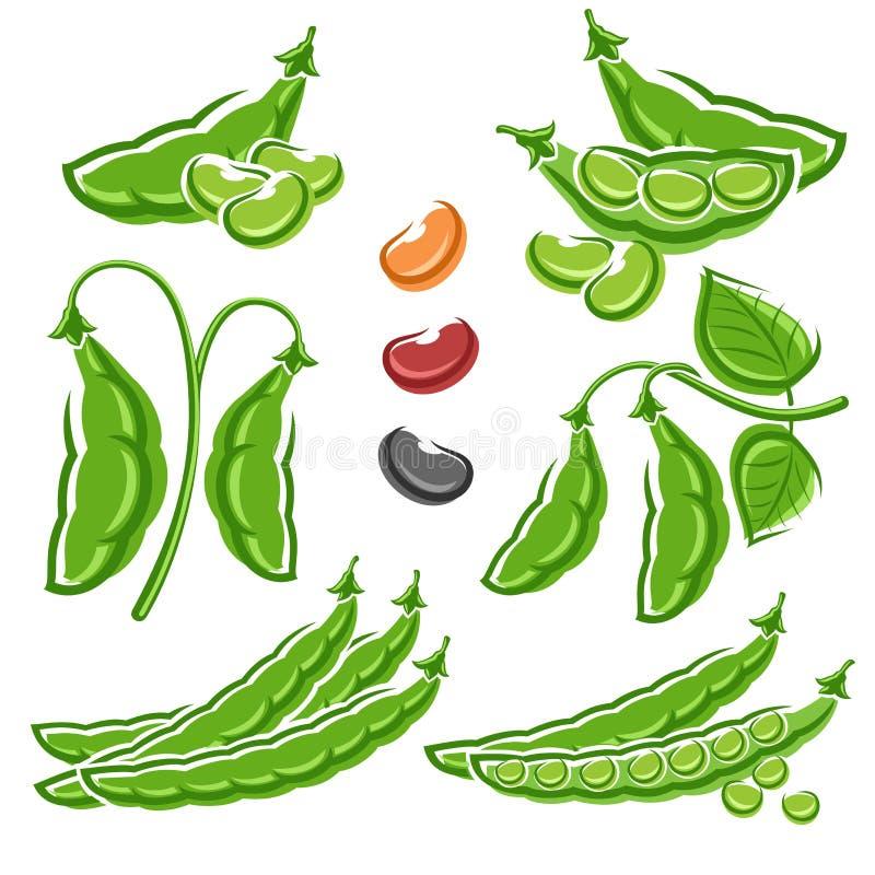 Beans set. Vector royalty free illustration