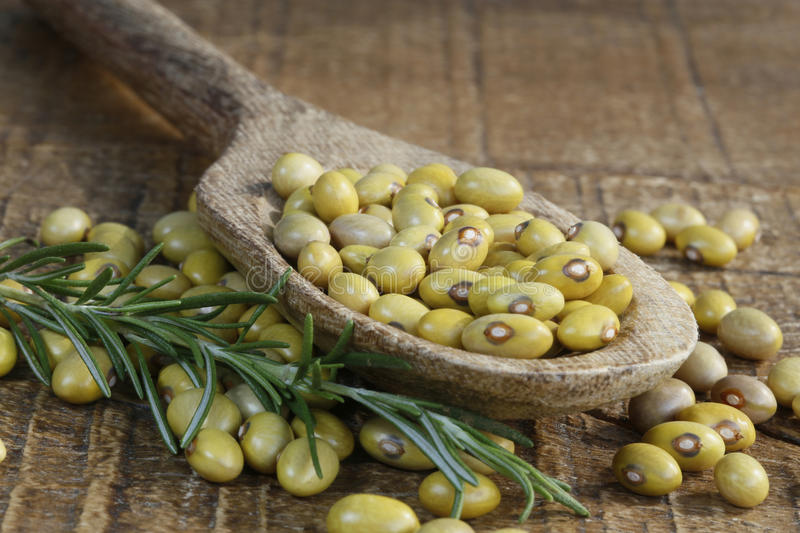 Beans. In wood spoon with rosemary royalty free stock images