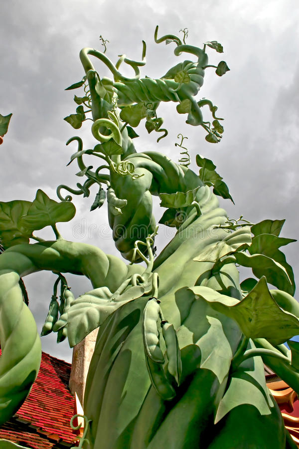Beanstalk royalty free stock photos