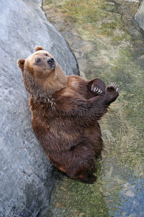 Download Bear stock image. Image of bears, cuddly, defence, huge - 1301659