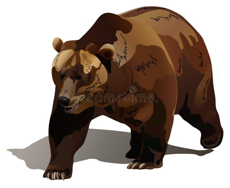 The bear vector illustration