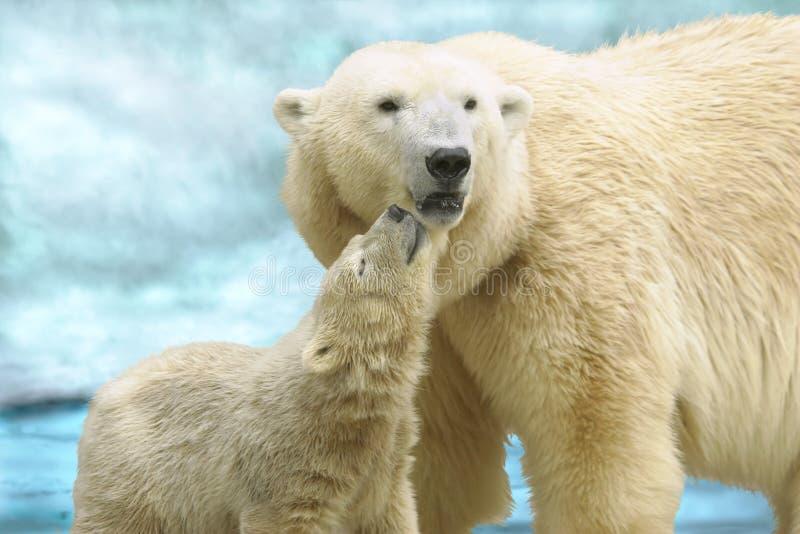 She-bear with a bear cub stock photography