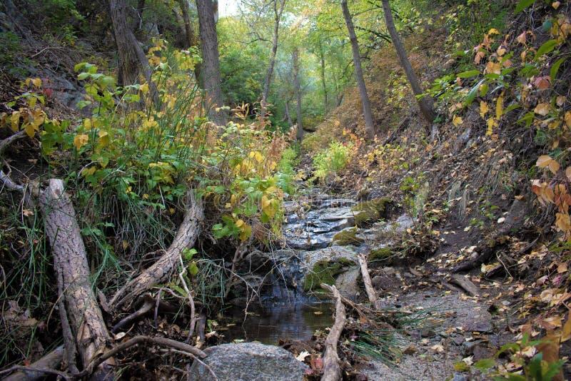 Bear Canyon Creek in the Morning Light. Bear Canyon Creek slowly trickling during a light morning rain royalty free stock photo