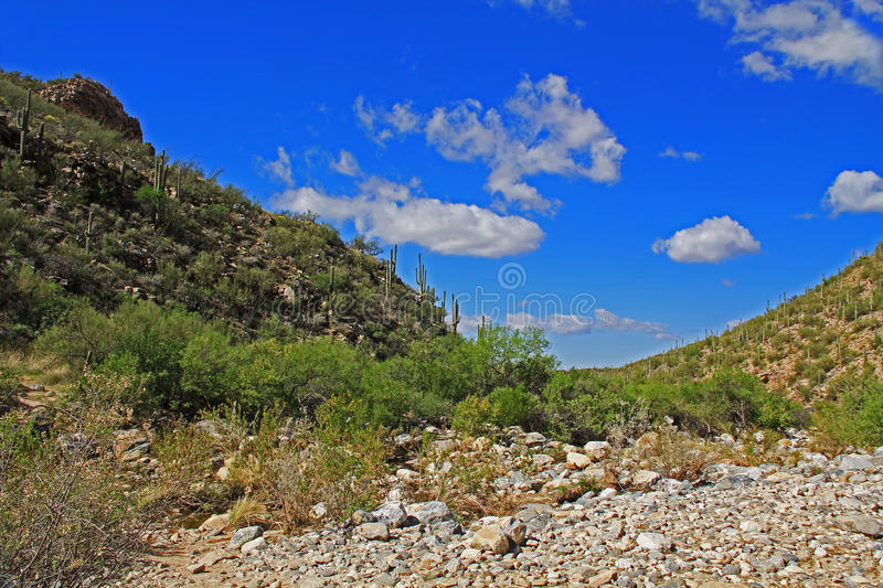 Bear Canyon in Tucson, AZ. Bear Canyon in Sabino Recreation Area Park in the Sonoran Desert along the Santa Catalina Mountains in Tucson, Arizona stock photo