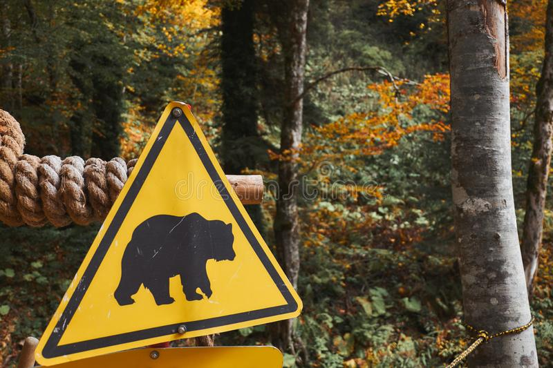 Bear caution yellow sign at autumn forest background. Wild animal danger concept stock photography