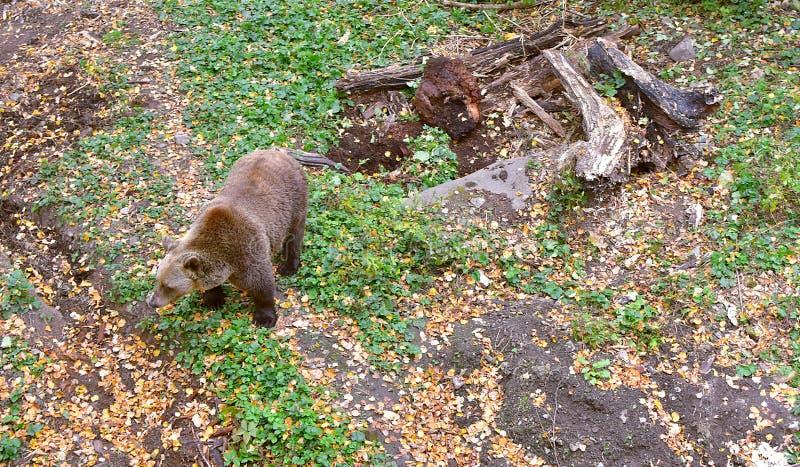 Bear Castle Outdoor Cesky Krumlov stock photography