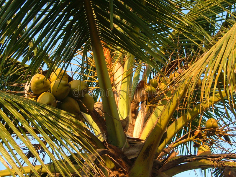 Download Bear Fruits stock photo. Image of tropical, blue, fruit - 133656