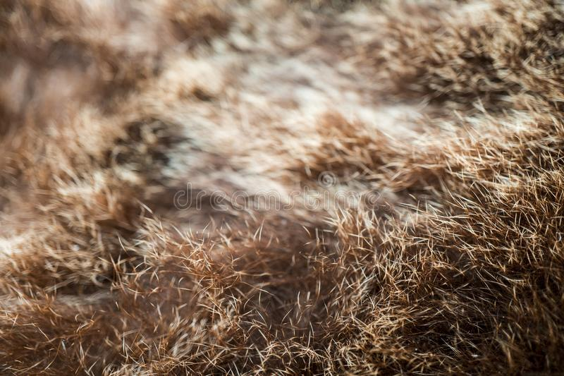 Bear fur texture. Background image of bear hair royalty free stock image