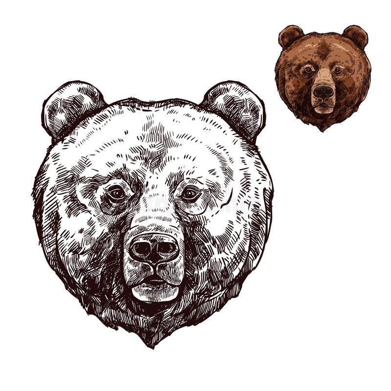 Bear or grizzly animal sketch of wild predator. Bear head isolated sketch of wild animal. Grizzly bear muzzle with brown fur, forest predator for hunting sport royalty free illustration