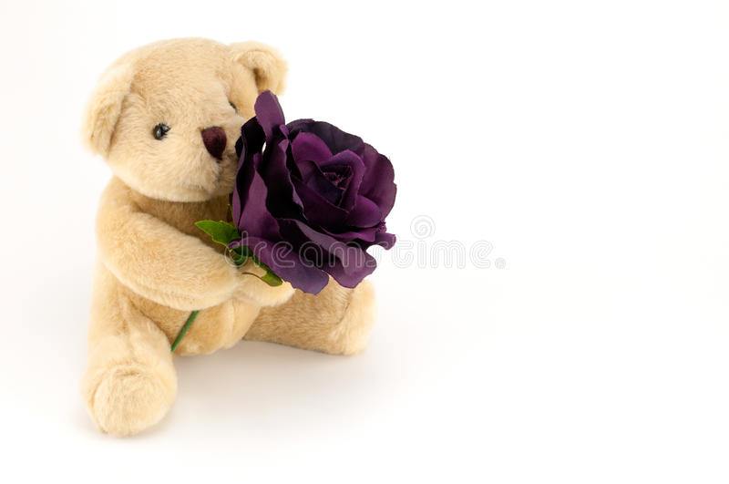 Bear hold a purple rose for an anniversary or Valentines royalty free stock photos