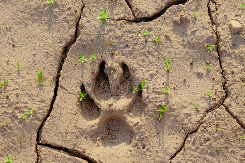 Bear Paw Print royalty free stock photos