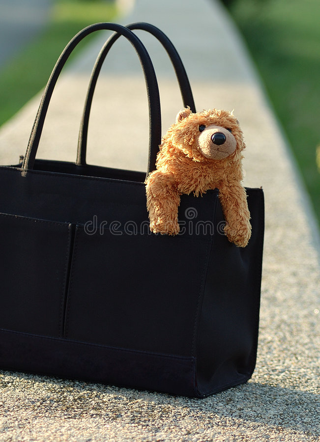 Download Bear in purse stock photo. Image of everyday, nose, things - 16632