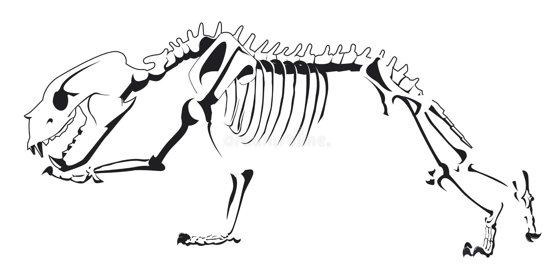 Bear skeleton design is running stock illustration