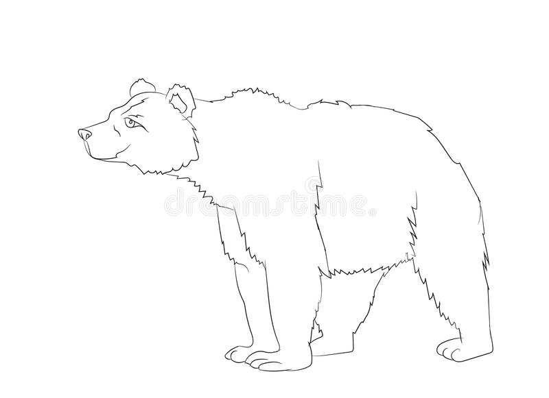 Bear stands, line, vector royalty free illustration