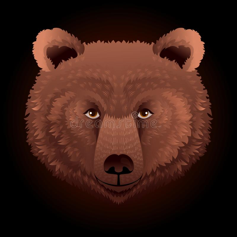 Bear wild animal face. Grizzly cute brown bear head portrait. Realistic fur portrait of brown large bear isolated on vector illustration