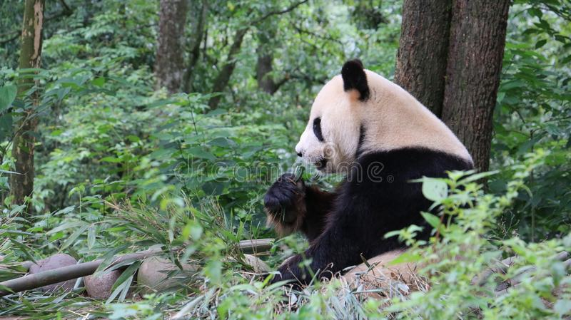 Bear, Wilderness, Nature Reserve, Terrestrial Animal royalty free stock photo