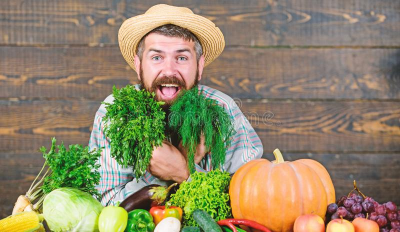 Beard health. organic and natural food. happy halloween. seasonal vitamin food. Useful fruit and vegetable. harvest. Festival. man chef with rich autumn crop royalty free stock image