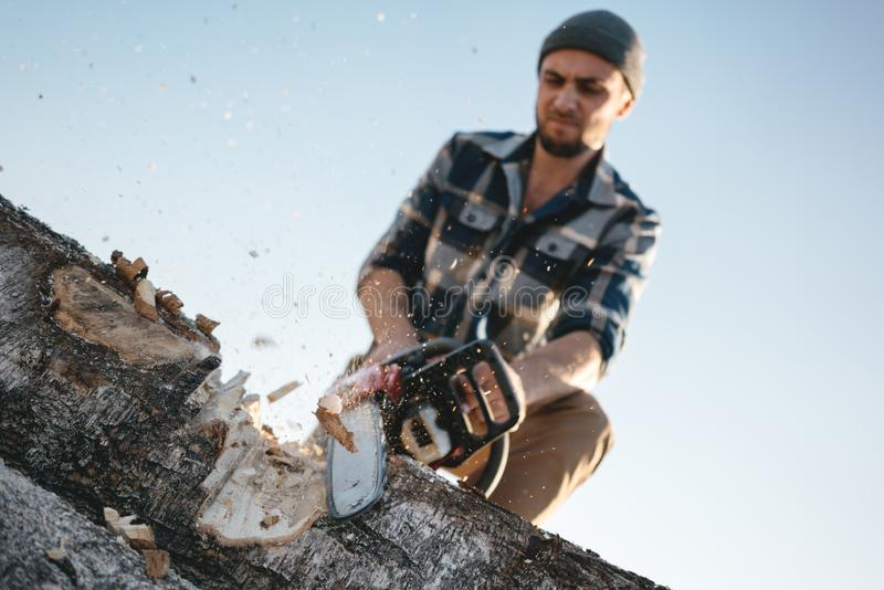 Bearded brutal lumberjack worker saw the tree with a chainsaw royalty free stock photography