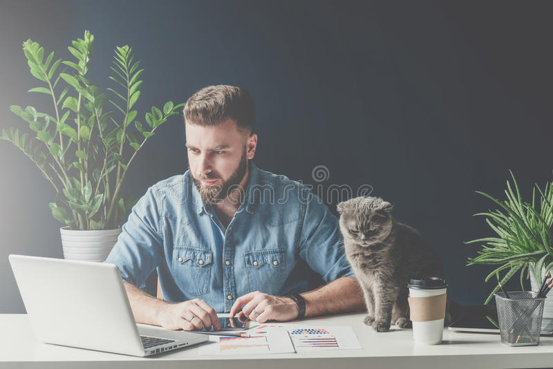 Bearded businessman sits in office at table and uses laptop, next sits gray cat. stock photos