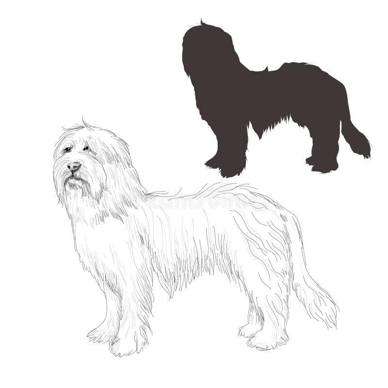 Bearded Collie-Hundeskizze lizenzfreie abbildung